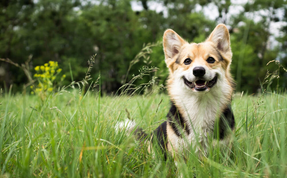 Protect your dogs from heartworm when they're outside.