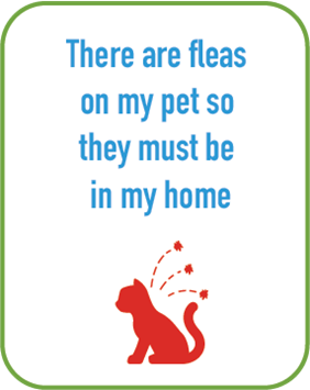 There are fleas on my pet so they must be in my home
