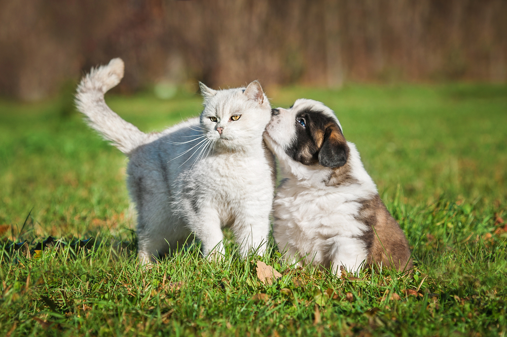 With three easy steps, you can protect your pet—cat or dog—from fleas and ticks.
